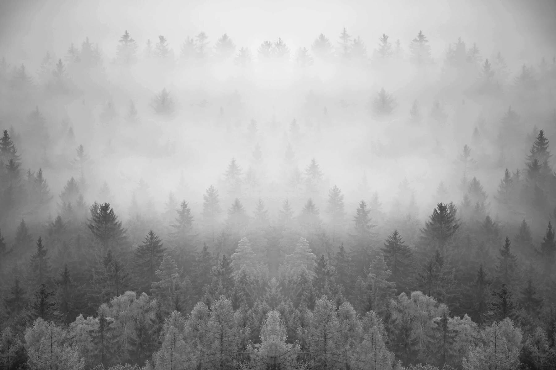 PlateART Duschrückwand mit Motiv Design Nebelwald Grau