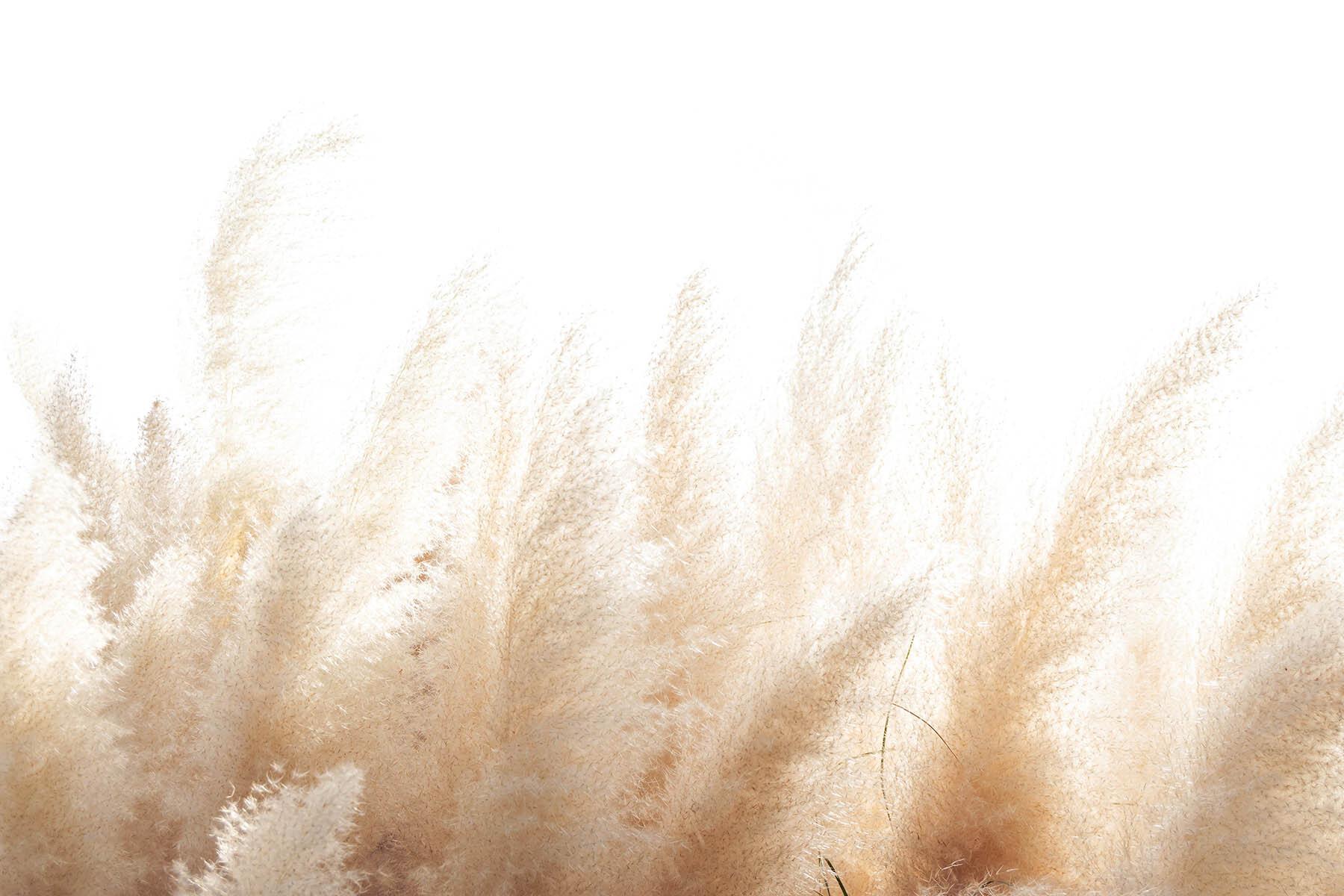 PlateART Duschrückwand mit Motiv Gräser Pampas Gras