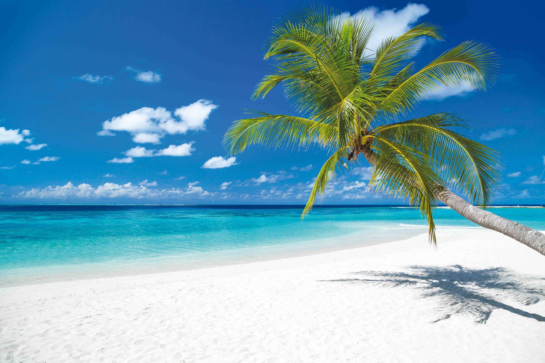 PlateART Duschrückwand mit Motiv Strand und Meer Karibik Palme