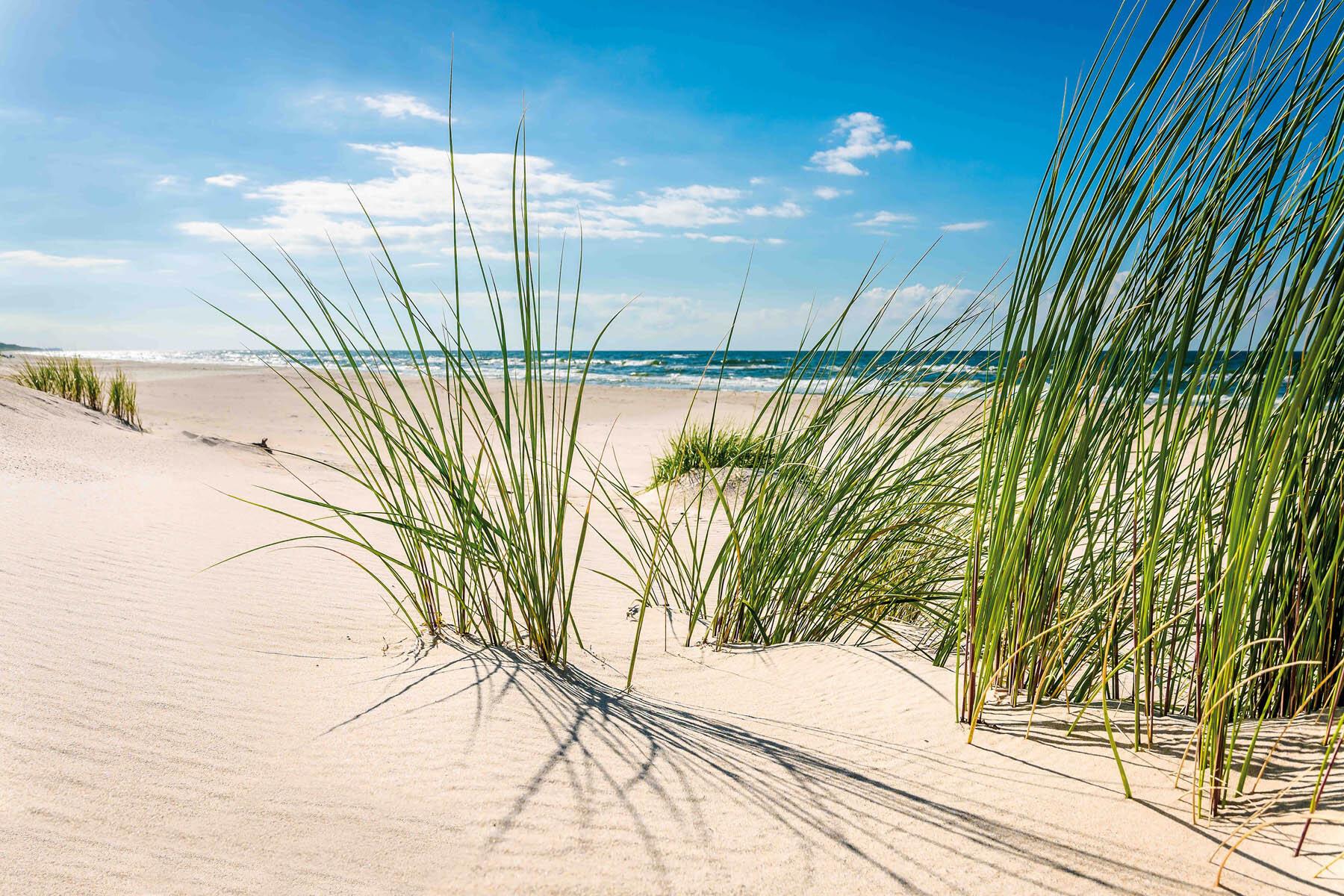 PlateART Duschrückwand mit Motiv Strand und Meer Sand Gras