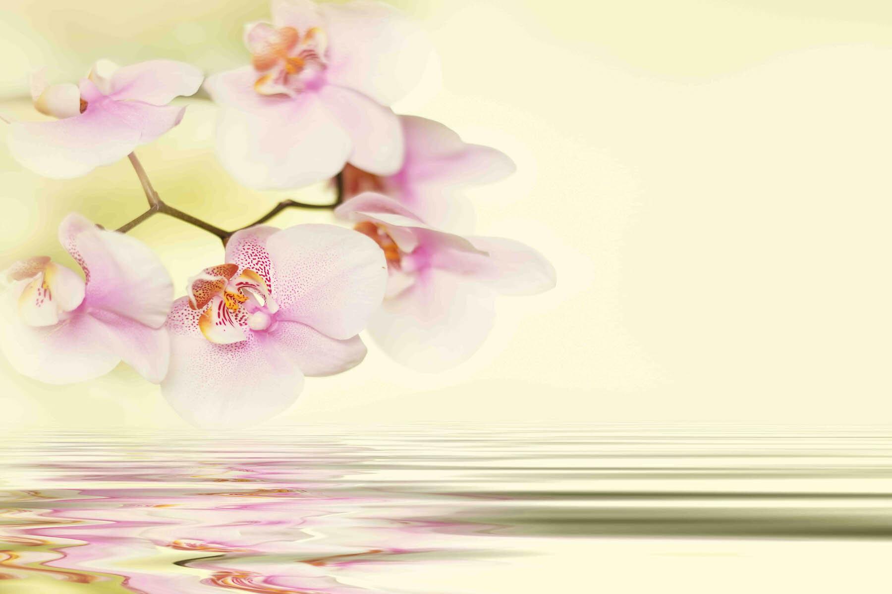 PlateART Duschrückwand mit Motiv Wellness Orchidee