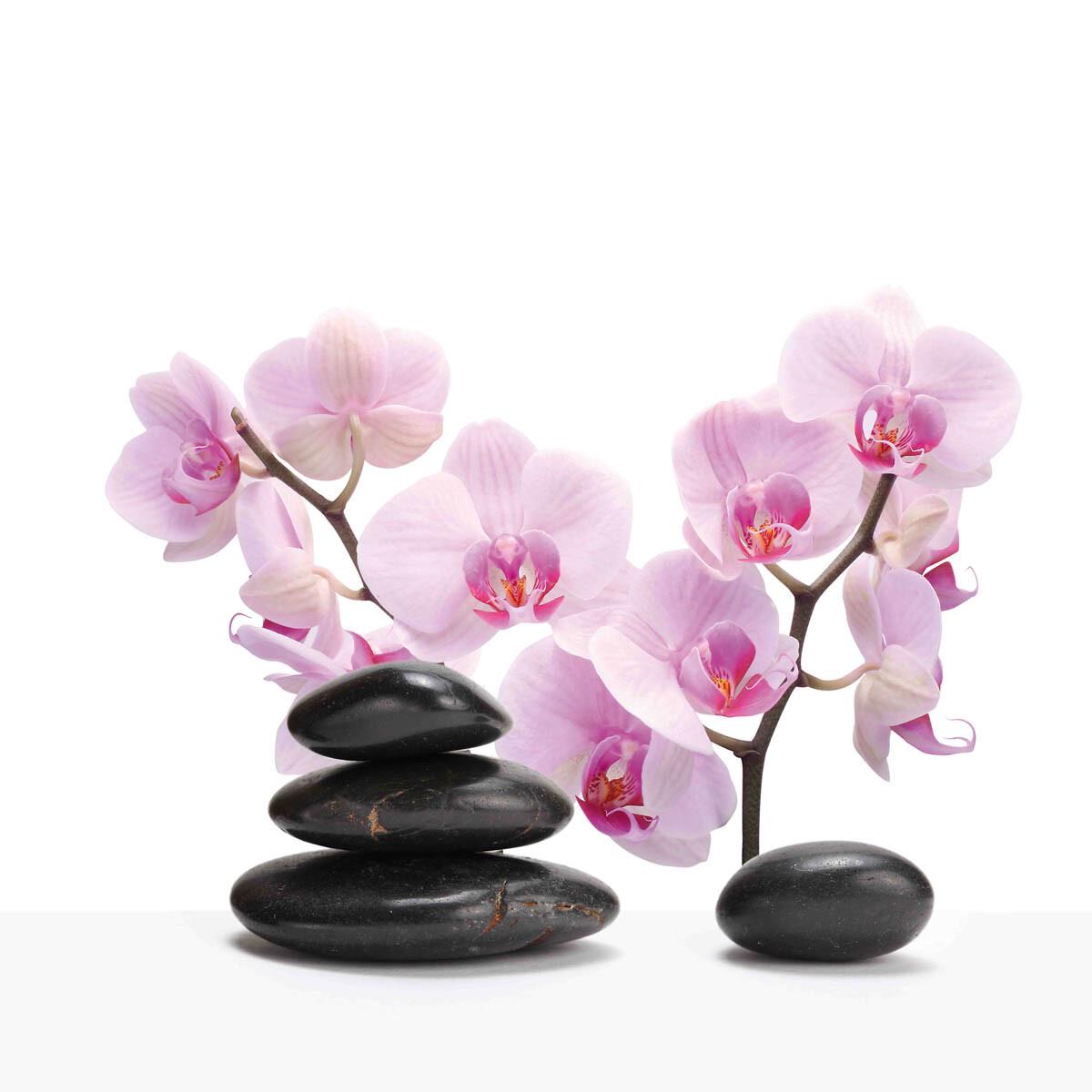 PlateART Duschrückwand mit Motiv Wellness ZEN Orchidee