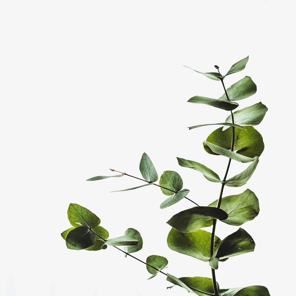 PlateART Duschrückwand mit Motiv Wellness Blätter